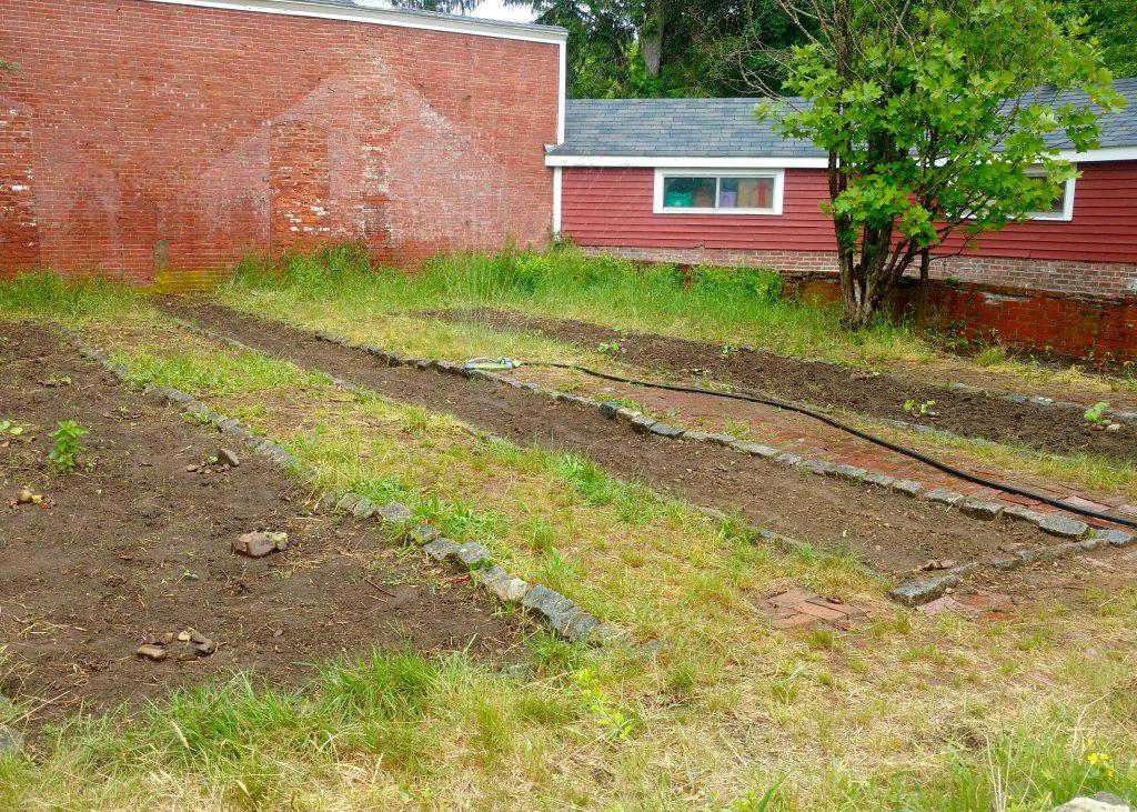 planted garden 2