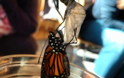 Science in Nature: Monarchs at Moraine Farm